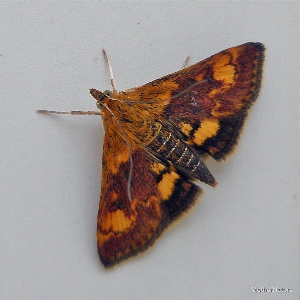 Orange Mint Moth -  Pyrausta orphisalis by MotherNature