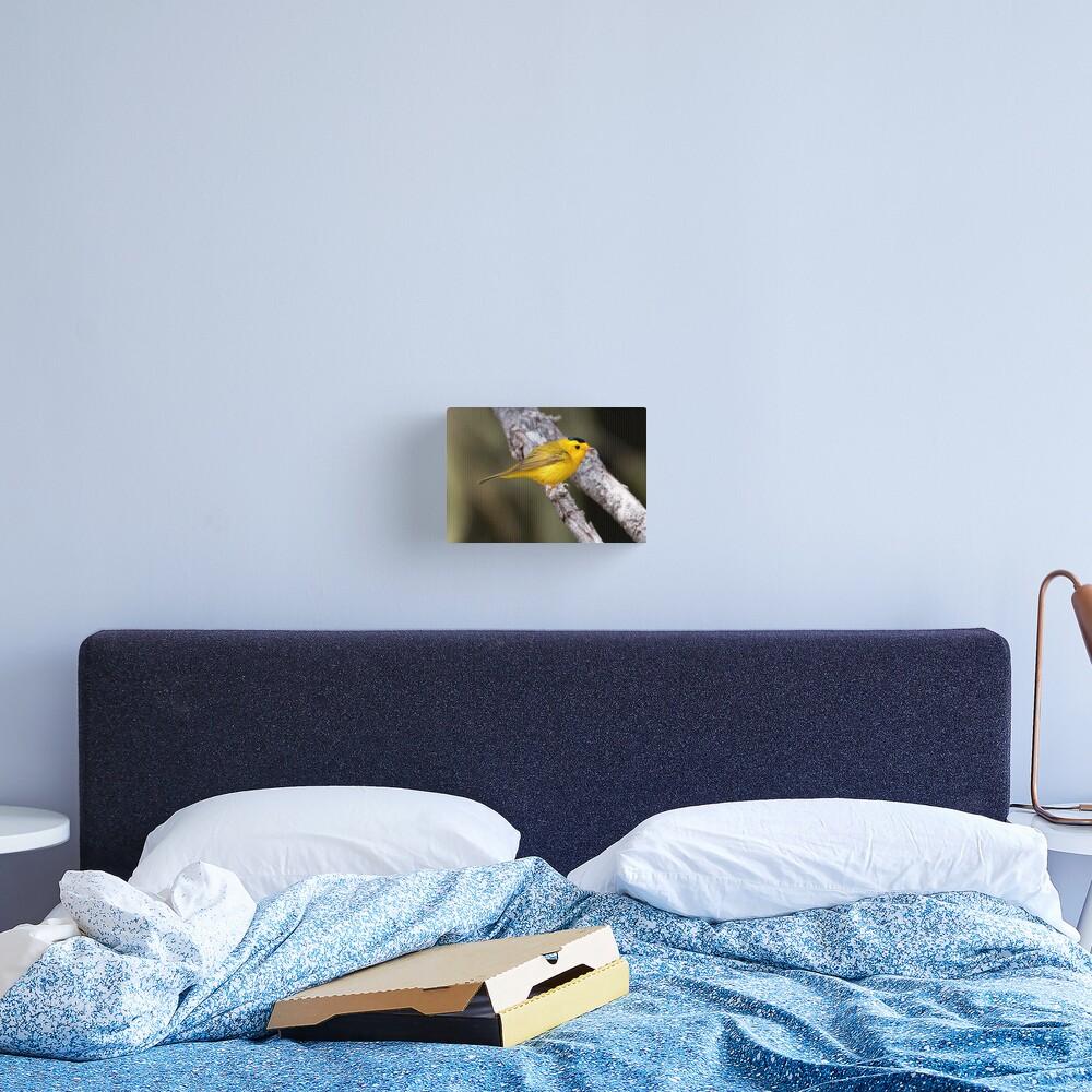 Wilson's Warbler Canvas Print