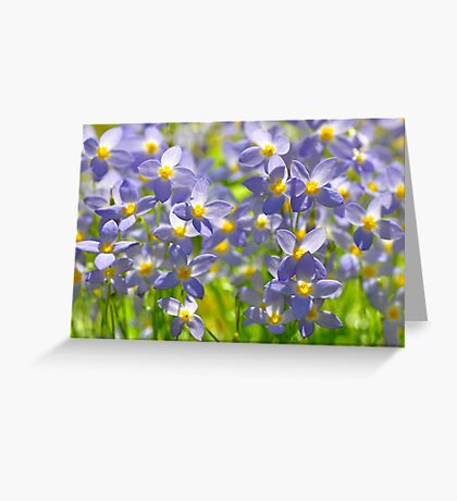 A Sea of Bluets Greeting Card