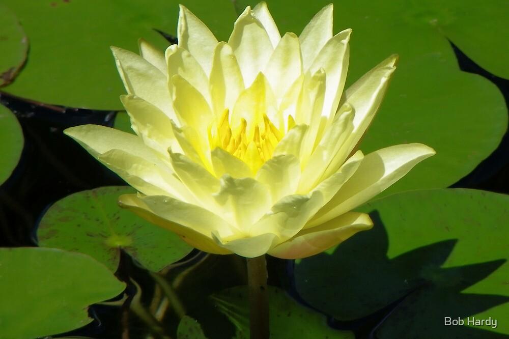 Golden Lotus by Bob Hardy