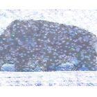 snow bison by David  Kennett