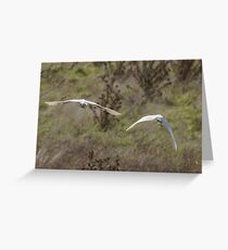 My most common viewpoint of the egrets today Greeting Card