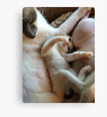 Playful Kitten Canvas Print