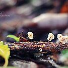 Little Fairy by fRantasy