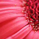 Pollen on Pink by Susana Weber
