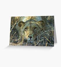 """Intense"" - lioness (Panthera leo) - Thornybush game reserve  - SA Greeting Card"