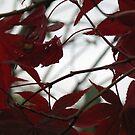Autumn #1 by kossimarsalsa