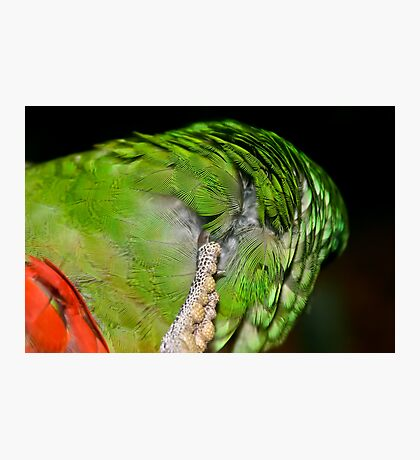 Feather Scratch Photographic Print
