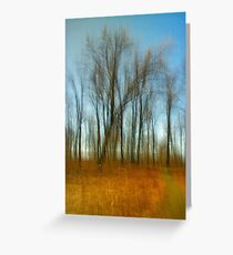 Along A Trail Kitty Todd Nature Preserve Greeting Card