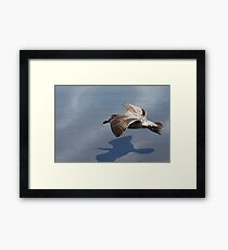 Low Flying Seagull on Doran Beach Framed Print