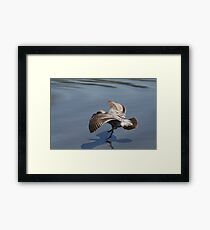 Seagull Landing on Doran Beach Framed Print