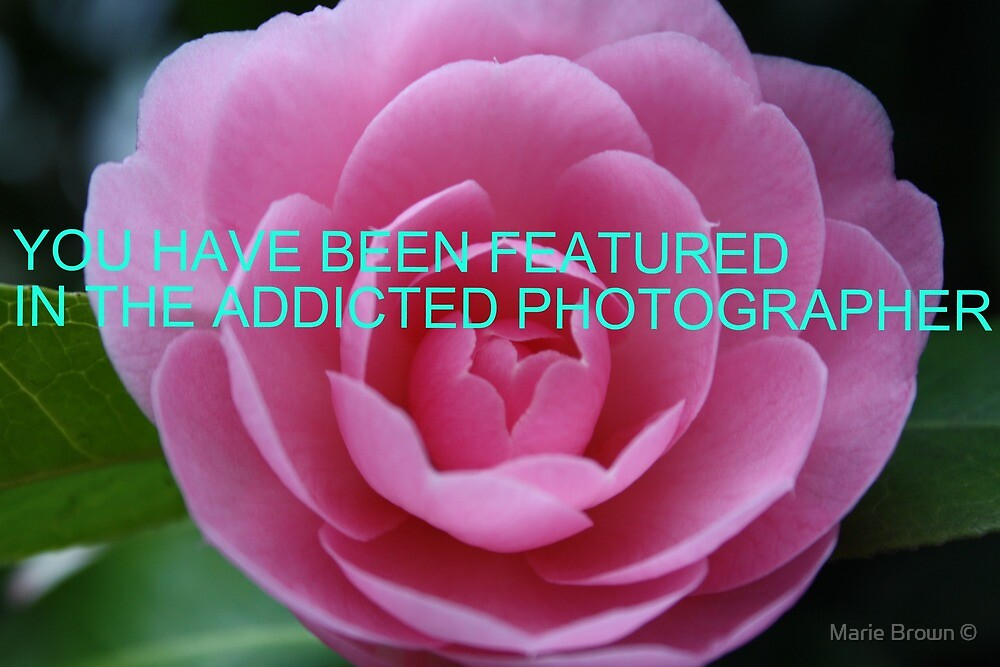 FEATURED BANNER by Marie Brown ©