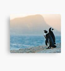 Magic hour penguin Canvas Print