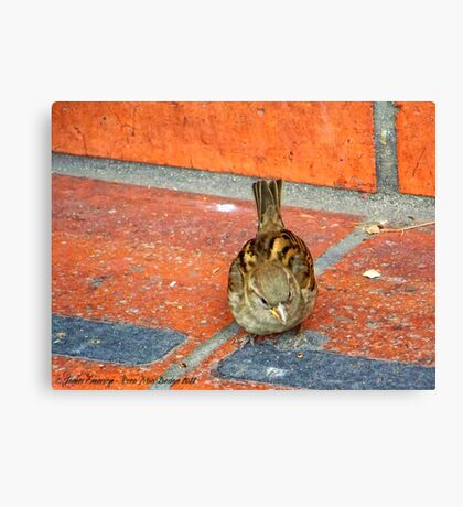 Another Tourist (House Sparrow) Canvas Print