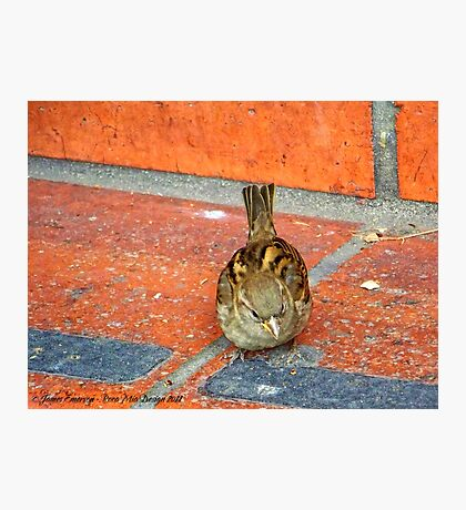 Another Tourist (House Sparrow) Photographic Print