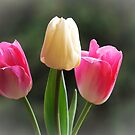 Tulips of Pink & White by Bev Pascoe