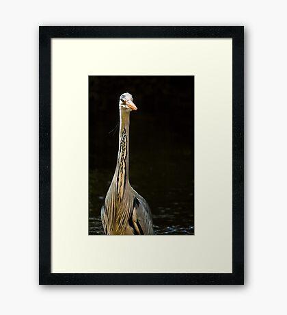Portrait Of A Heron Framed Print