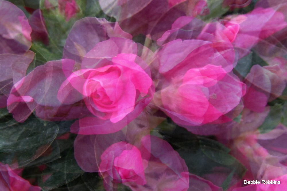 Azalea Abstract by Debbie Robbins