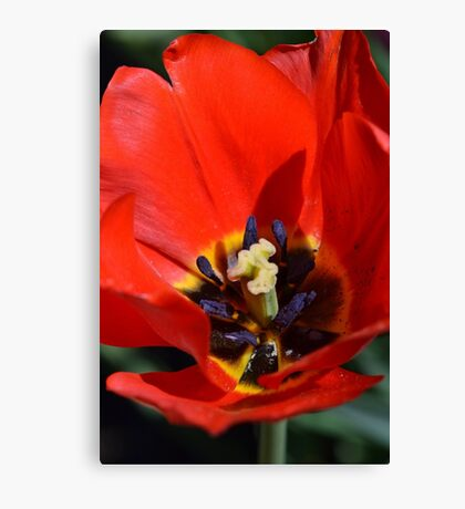 An Array of Colors. Canvas Print