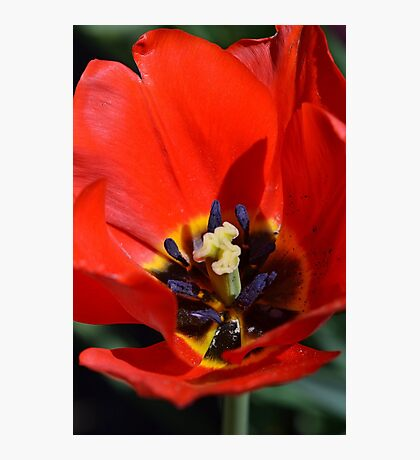 An Array of Colors. Photographic Print