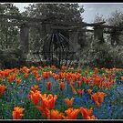 Mount Stewart Gardens by Jonny Andrews