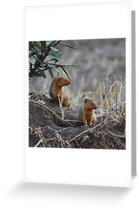 Dwarf Mongoose, Serengeti, Tanzania  by Carole-Anne