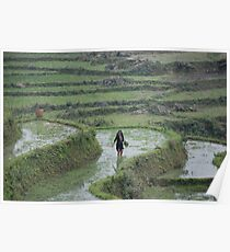 rice fields. sapa. vietnam Poster