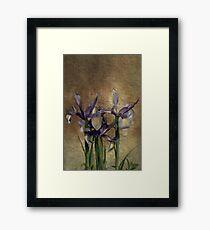 Iris's Framed Print