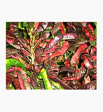 BEANS THE STRING BEAN Photographic Print