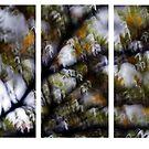 Bush lands #07 by LouD