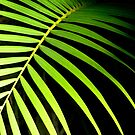 frond by AlleScottPrints