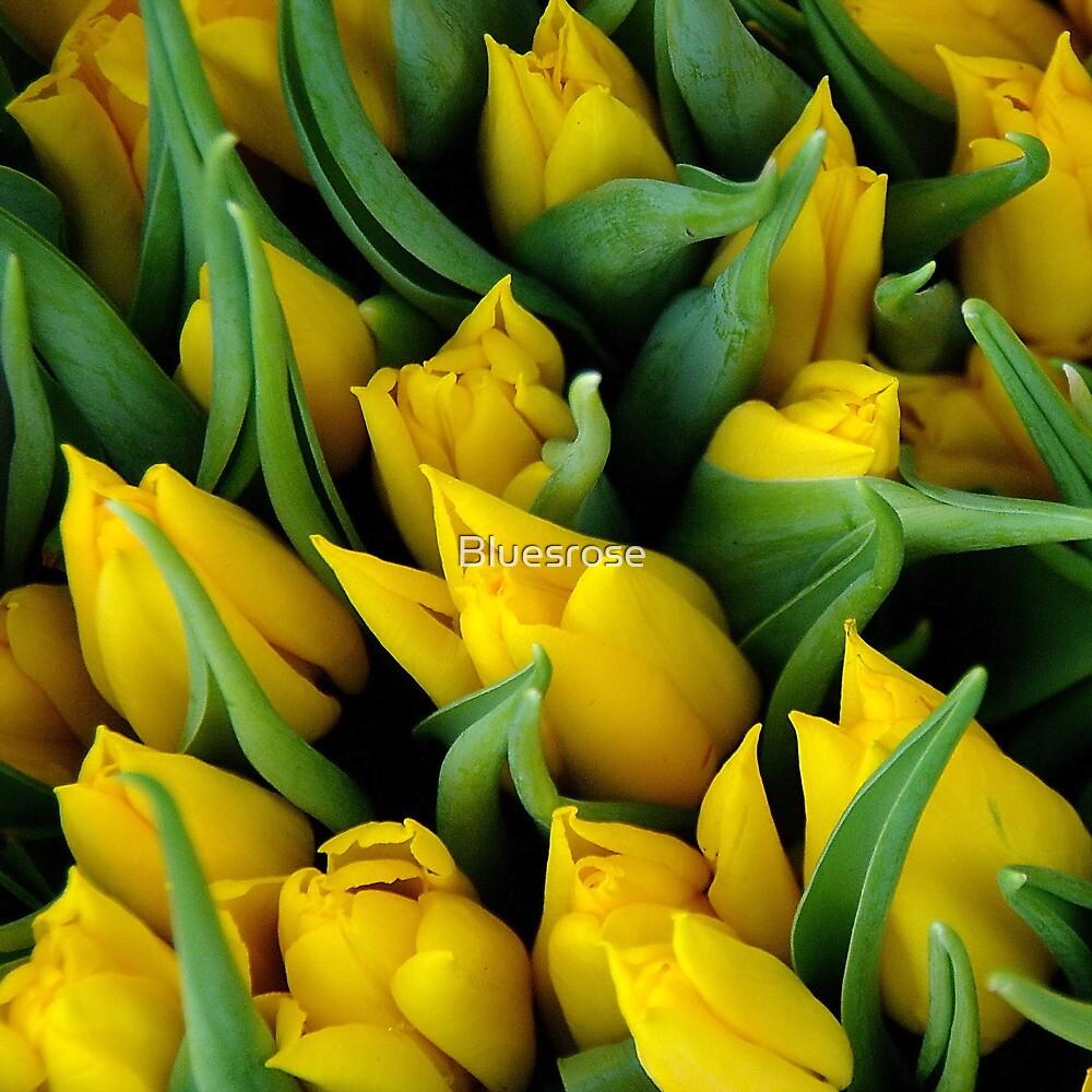 Tulips. II by Bluesrose