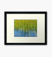 Reflection of Reeds - Abstract from Nature Framed Print