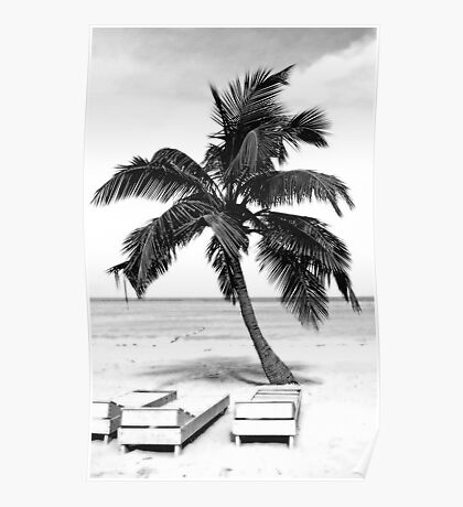 Jamaican Pallm in Black and White Poster