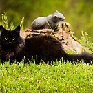 Plastic Squirrel Patrol by Jeanne Sheridan