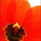 Heart of the tulip by Katseyes