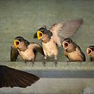 Singing for our supper by Bonnie T.  Barry