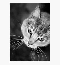 Watchful Companion Photographic Print