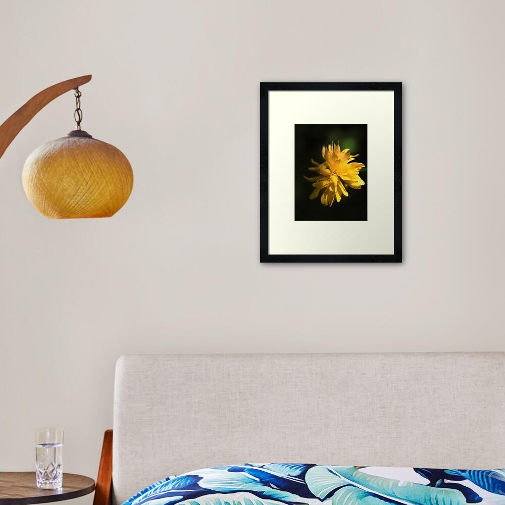 Beautiful Yellow Flower in Full Bloom Framed Art Print