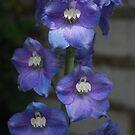 Perfect Purple by Geraldine Miller