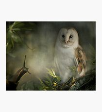 The Owl looked at Brian kindly... Photographic Print