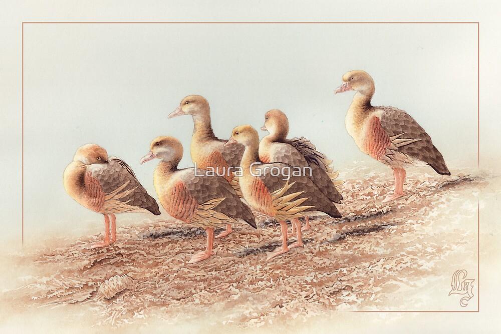 Plumed Whistling Ducks card by Laura Grogan