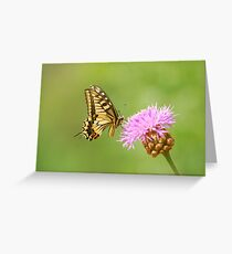 swallowtail and thistle Greeting Card