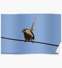 An uncommon bird seen in Mumbai  Poster