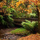 Autumn display by Stephanie Johnson