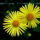 Yellow friends by ciriva
