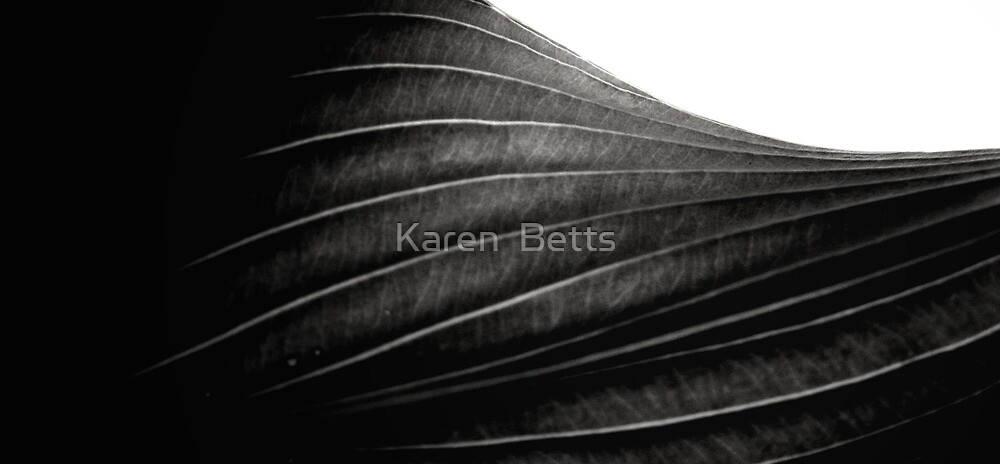 Curves of grey by Karen  Betts