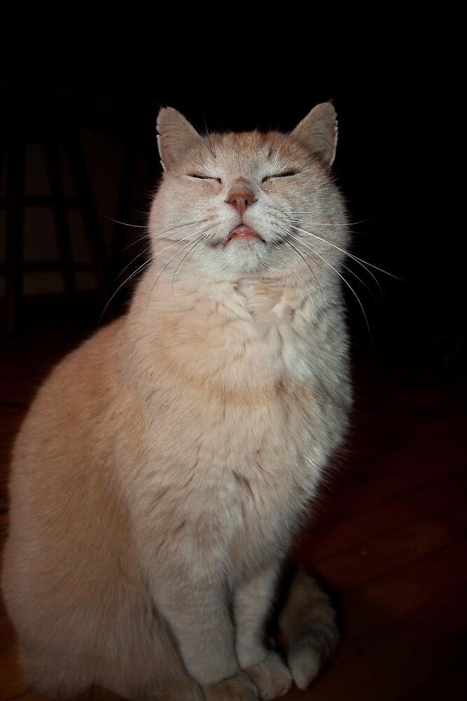 I'm A Happy Cat by Karen Kaleta