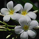 leelawadee flowers by newcastlepablo