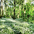 Wild Garlic  by Lilian Marshall